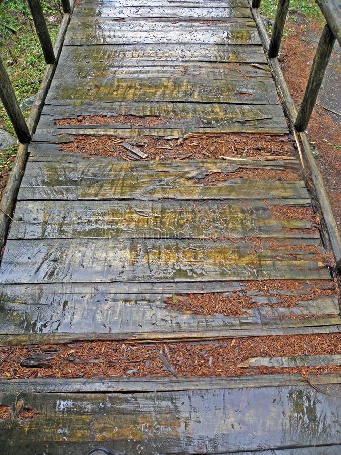 Free Golubinjak,forest In Late Autumn,10 Stock Photos - 77413023