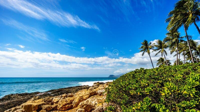 Golven die op de rotsachtige oever en de palmen verpletteren die in de wind onder blauwe hemel slingeren stock foto
