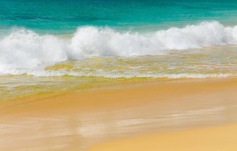 Golven van een tropische overzees stock foto's