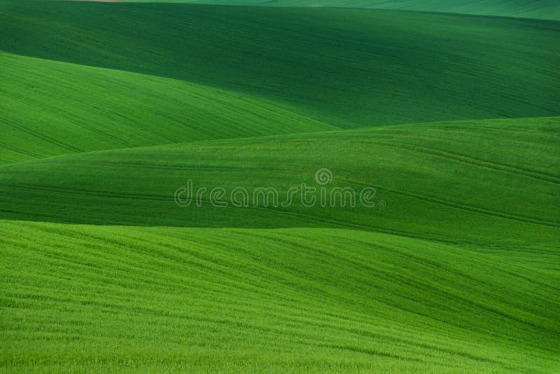 Golvend de zomer landelijk landschap in groene kleur Natuurlijke groene textuur als achtergrond De groene moravian lente die gebi royalty-vrije stock foto's