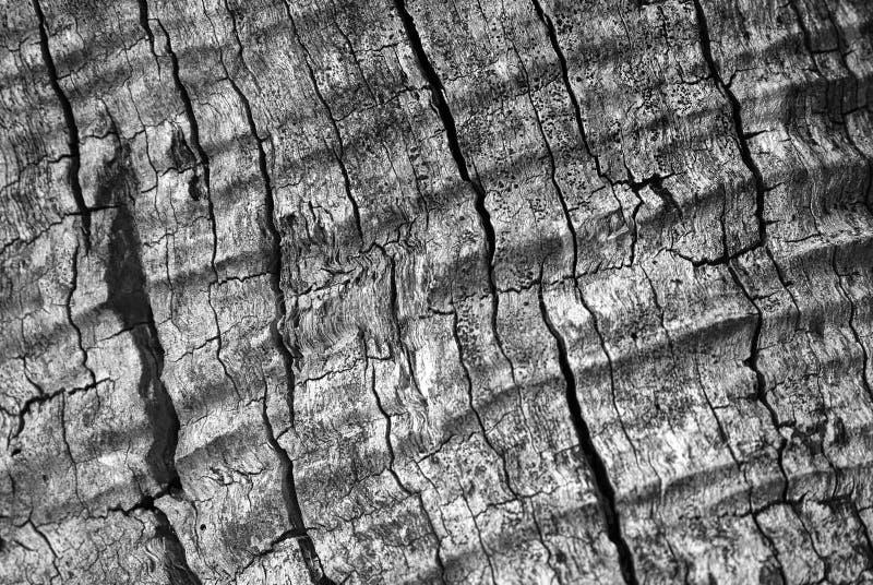 Golvende boomtextuur stock fotografie