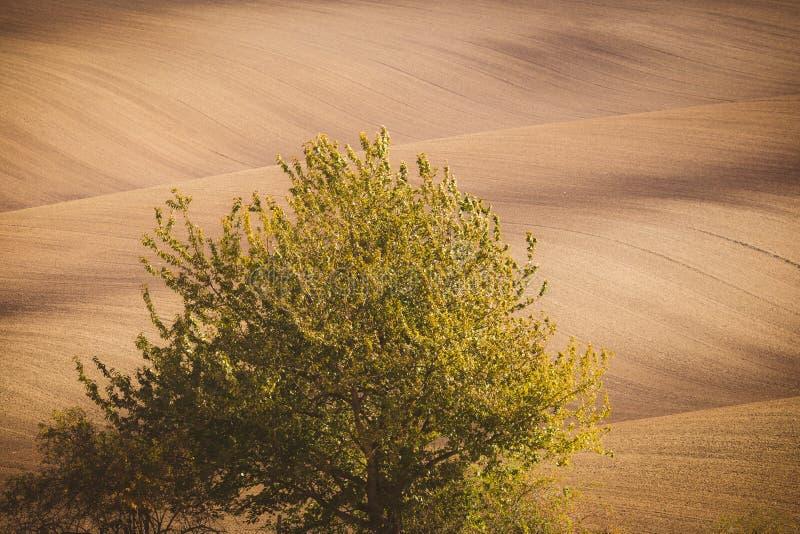 Golvende de herfstgebieden in Moravian Toscanië, Tsjechische Republiek royalty-vrije stock fotografie