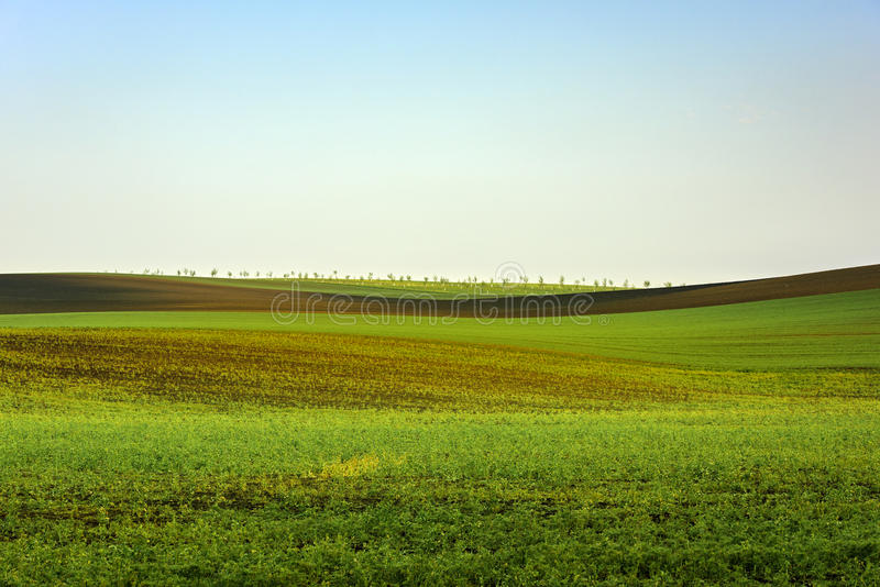 Golvende heuvels, de lentetijd in Zuid-Moravië royalty-vrije stock fotografie