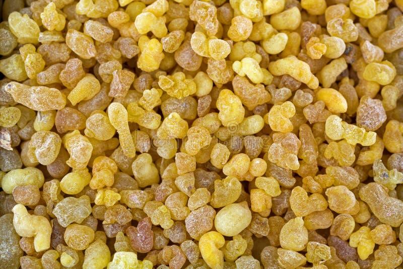A goma amarela aromática da resina da árvore sudanesa do incenso, incen fotografia de stock