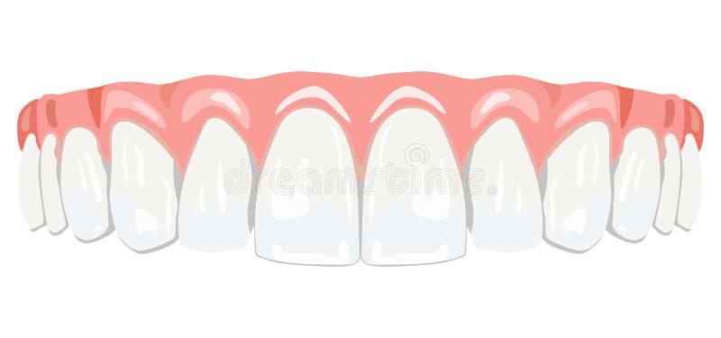Gomas dos dentes ilustração stock