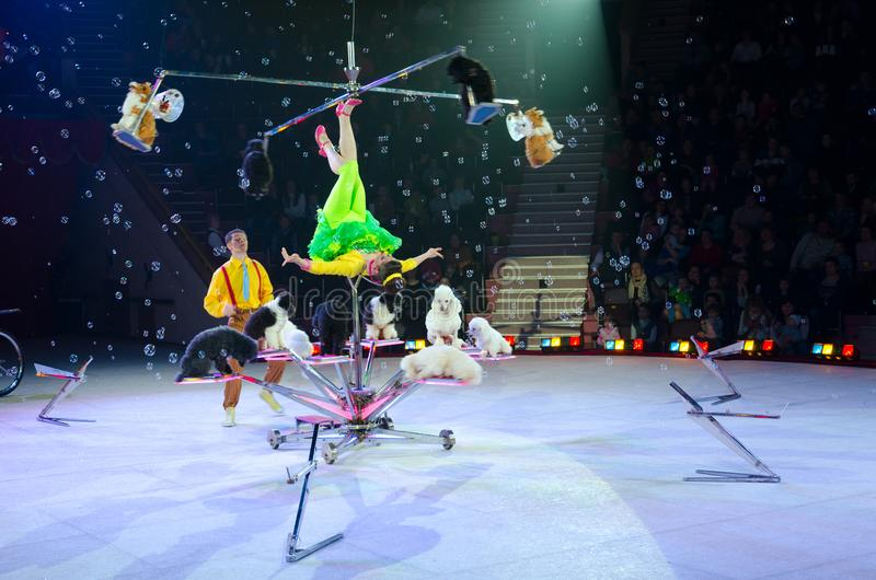 Tour of Moscow Circus on Ice. Trained dogs under direction of Victoria Alexandrova stock image