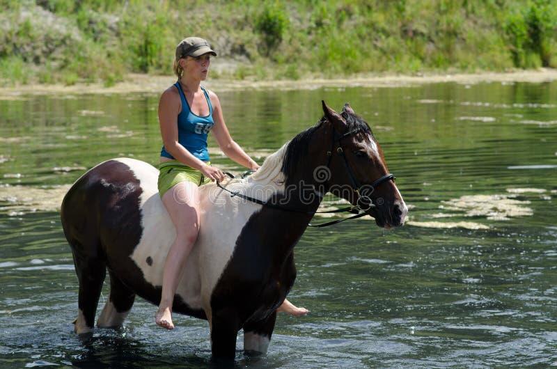 GOMEL BIAŁORUŚ, CZERWIEC, - 24, 2013: Kąpanie konie w jeziorze obrazy royalty free