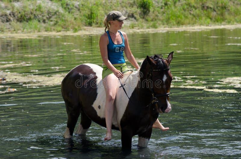 GOMEL, BIELORRÚSSIA - 24 DE JUNHO DE 2013: Banhando cavalos no lago fotos de stock