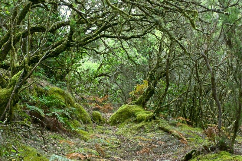 gomera larainforest arkivbilder