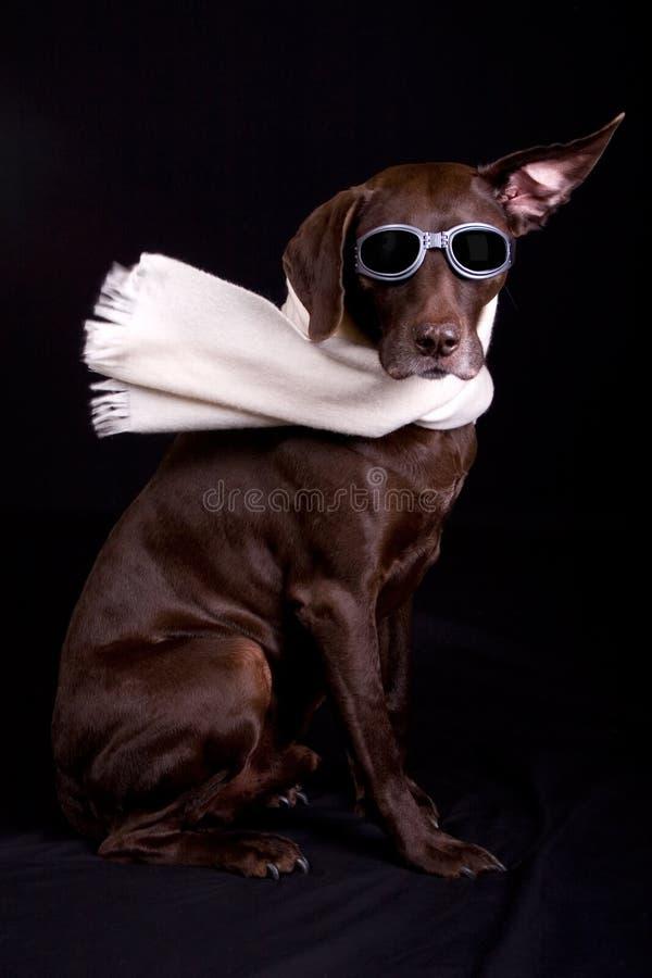 A gomito esso sul cane immagini stock libere da diritti