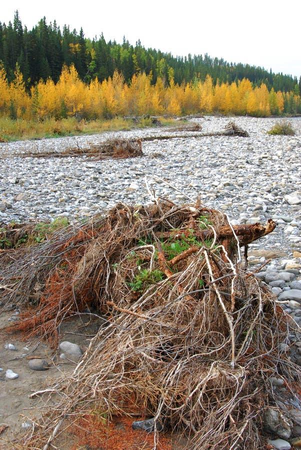Download Gomito River Valley In Autunno Immagine Stock - Immagine di gomito, foresta: 7318155