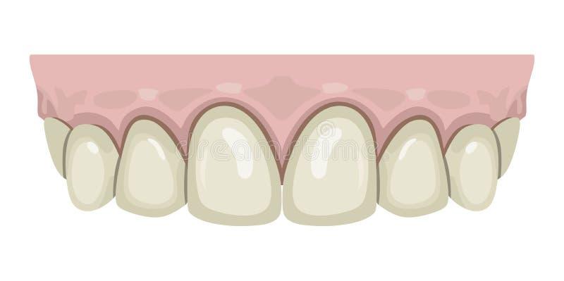 Gomme dei denti illustrazione di stock