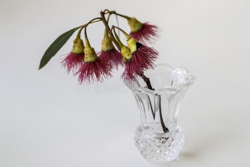 Gomme Rouge-fleurissante photographie stock