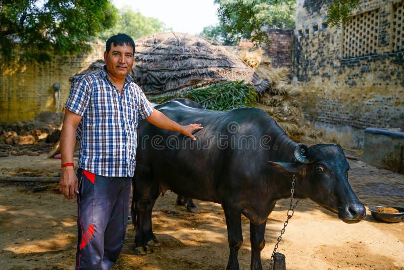 Gonda/India-30 10 2018: Bonden och hans inhemska ko fotografering för bildbyråer