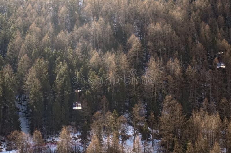 Gondel vor Kiefernwald stockbild