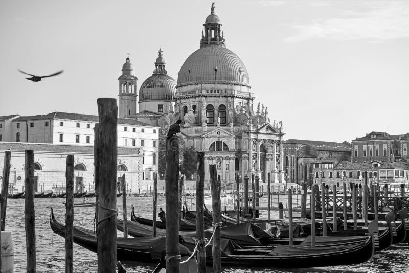 Gondol- och Santa Maria della Salute kyrka i Venedig royaltyfri foto