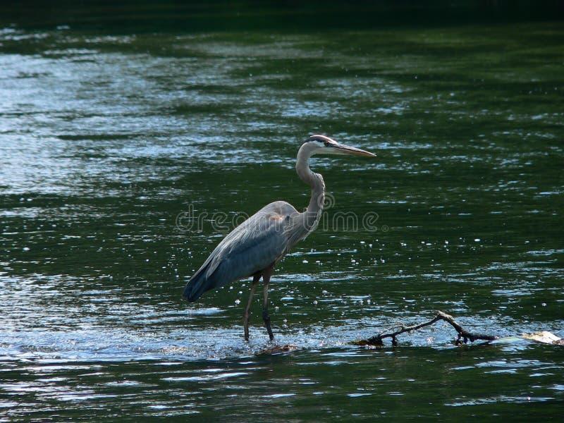 Gone Fishing Stock Photography