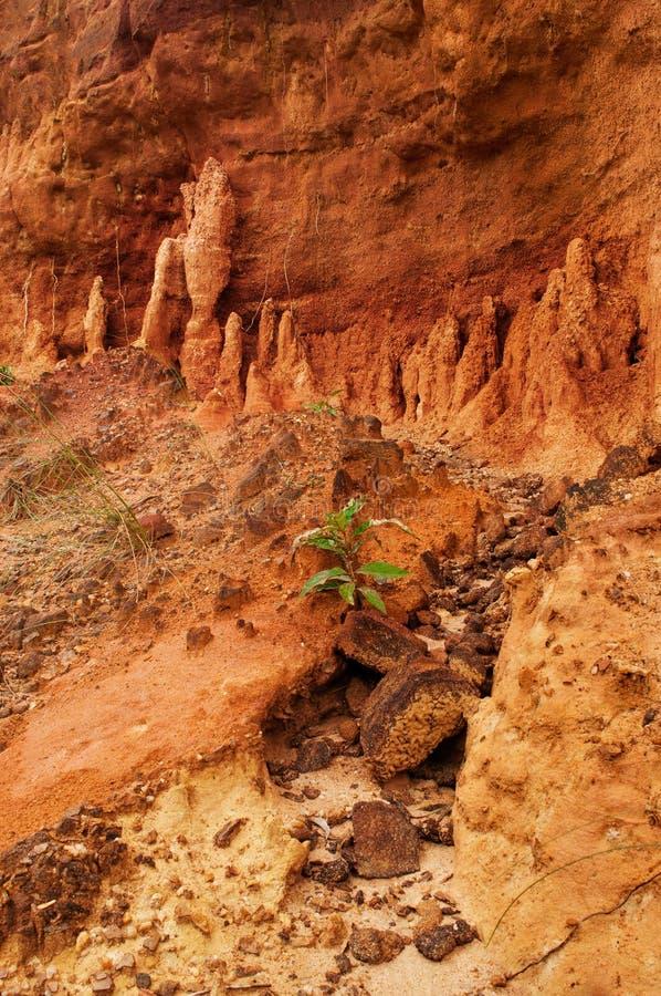 gongoni,西部Benga,印度红色土壤  库存图片