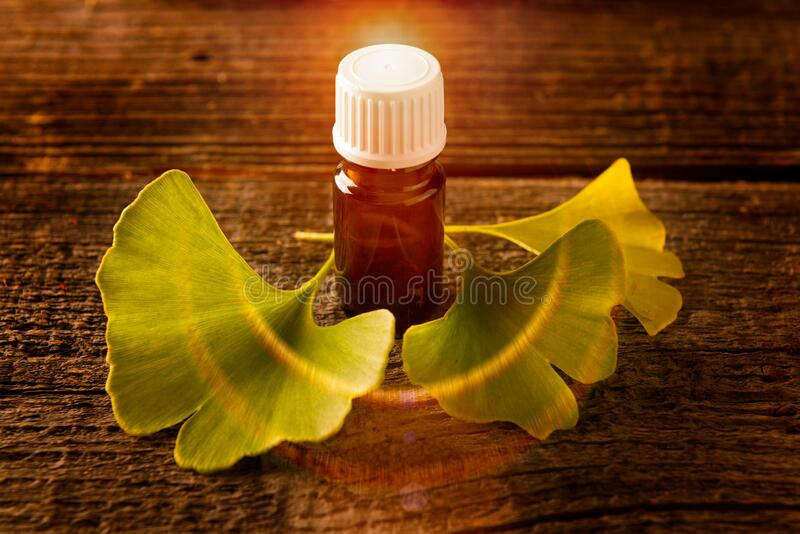Gonkgo-Blätter und Extrakt stockbilder