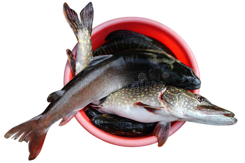 Download Good Catch Stock Photo - Image: 19667550
