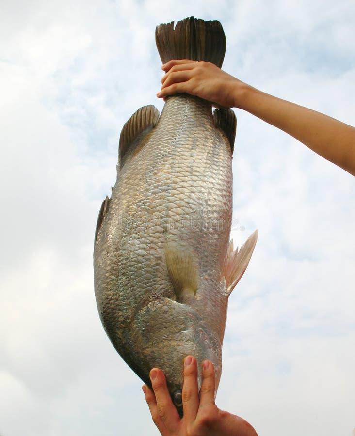 Good Catch -- Large Fish stock image