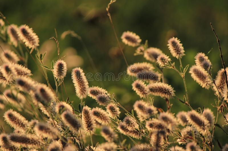 A good day abstract, fluffy flowers. A good day of walks gave amazing paintings of the landscape with a fluffy thorn royalty free stock photo