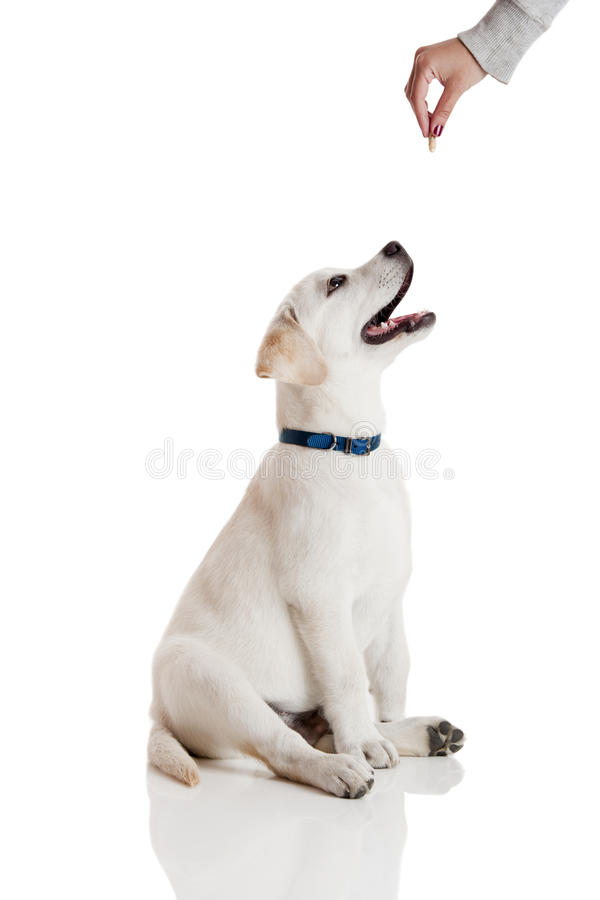 Good Dog stock photos