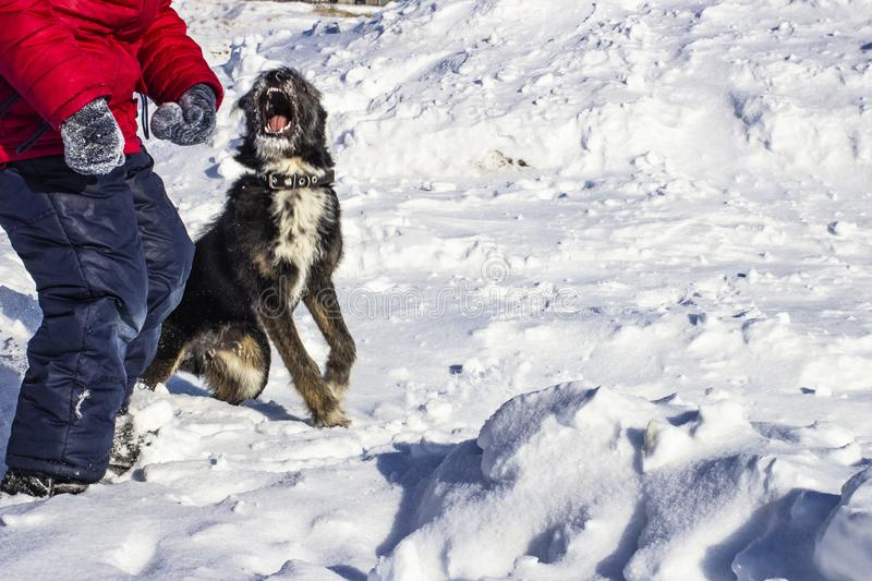Good dog in the snow close-up. Good dog in the snow close-u stock photography