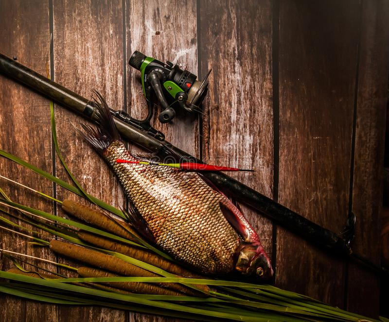 Good fishing. Fishing rod, bream, float, reel with fishing line on a wooden background. royalty free stock photo
