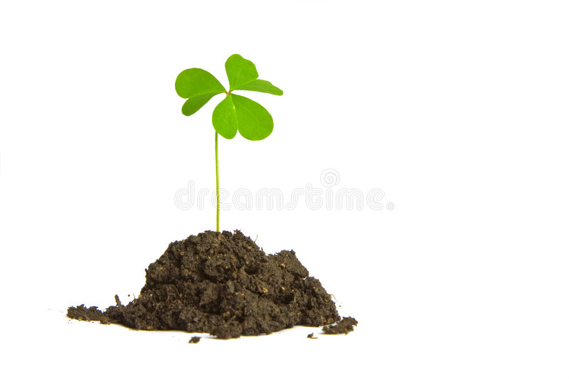 Download Good Luck ! stock photo. Image of lucky, single, ireland - 8205968