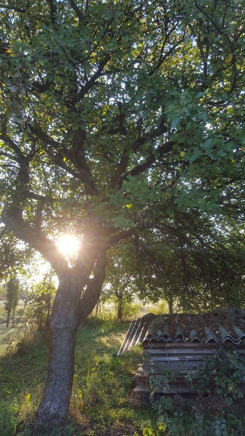 Good morning from Czech. Sun tree_captures sunrays morningview morning sunlight sundays morningwalk green tree_magic treeoflife treelovers sunnydays sunnyday stock image