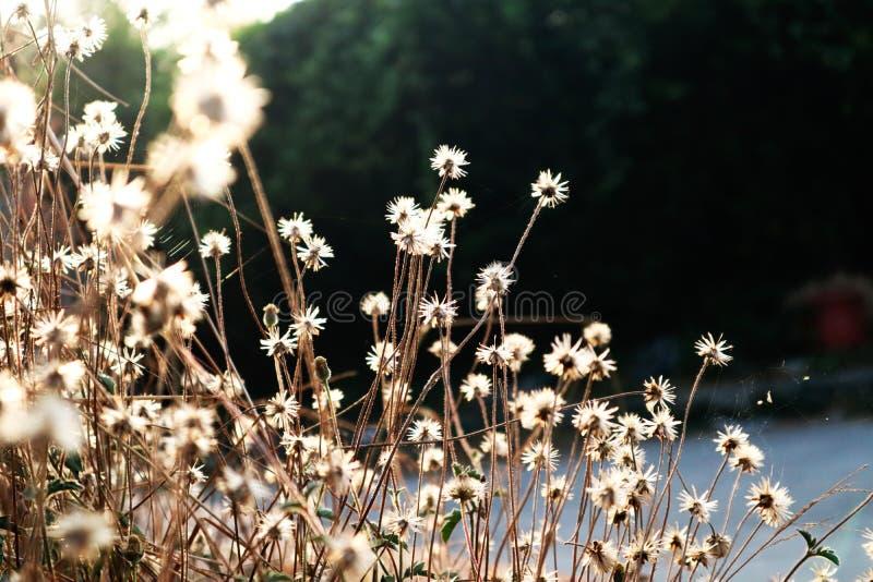 Good morning. Flower, sun, exploration, blurs, plants, city royalty free stock images