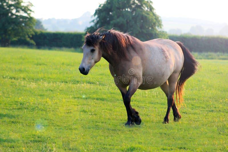 Good morning. Horse stock image