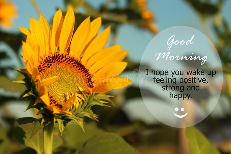 Good Morning Greetings. Morning inspirational motivational quote - I hope you wake up feeling positive, strong and happy.  With. Beautiful sunflower start stock photos