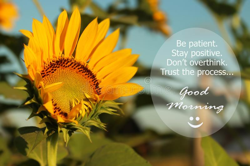 Good Morning Greetings. Morning inspirational motivational quote - Be patient. Stay positive. Do not overthink. Trust the process. With beautiful sunflower stock photo