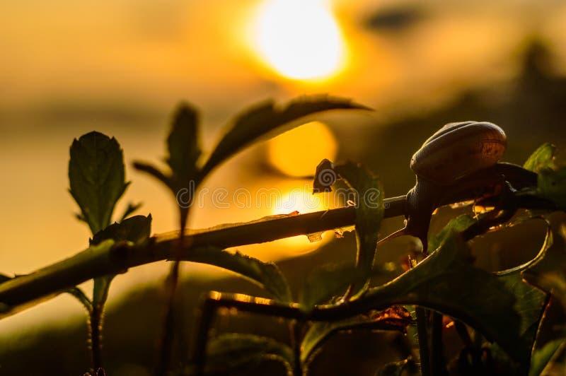 Good morning KhongChiam. Snails wake look Sun Good morning KhongChiam royalty free stock photos