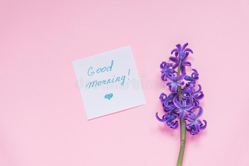 Good morning paper tag and purple hyacinth flower on pastel pink background royalty free stock photography