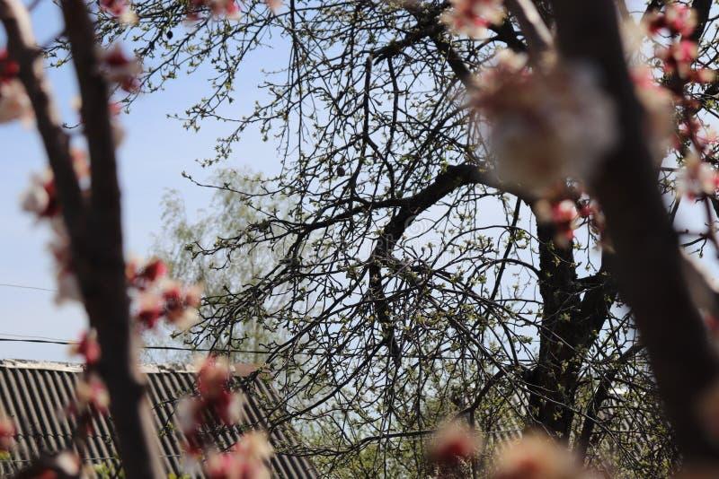 Good Morning plants. Spring tree royalty free stock photos