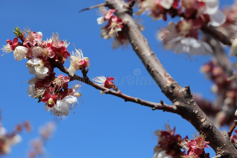 Good Morning plants. Spring tree royalty free stock photography