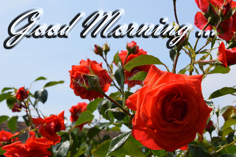 Good morning quote poster. With flowers stock photos