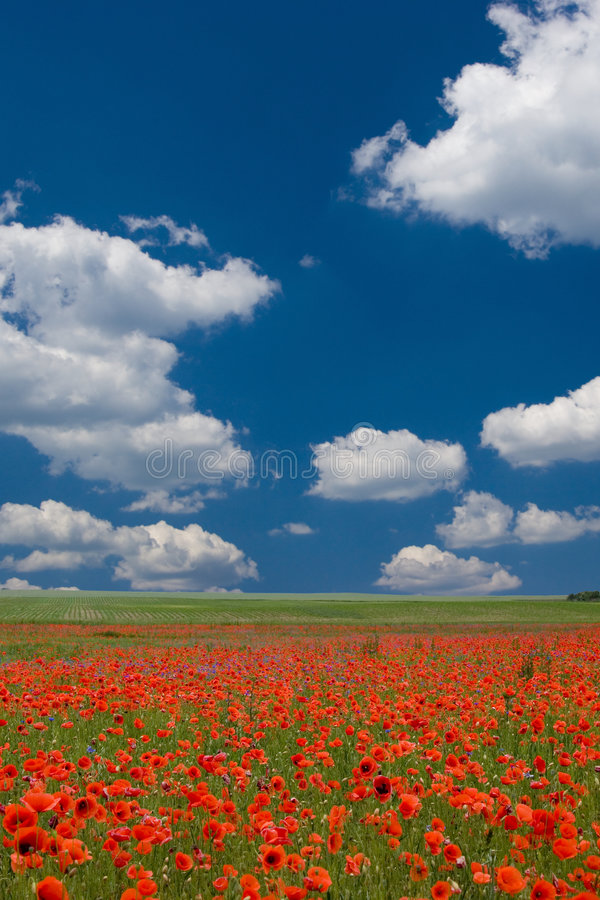 Good Morning SPRING royalty free stock images