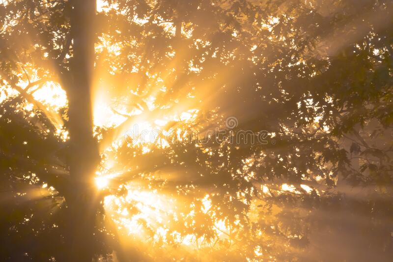 Good Morning Sun royalty free stock images