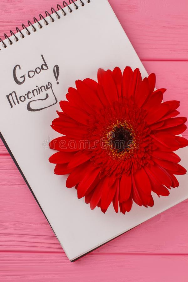 Good morning wish for girl. Notepad and red daisy flower. Pink wooden background royalty free stock photos