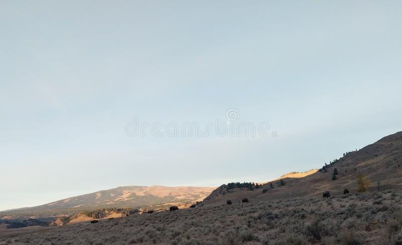 Good morning Yellowstone. Nationalpark, lamar, valley stock photos