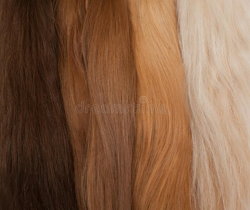 Natural hair for extensions. Different colors from black to blonde. Good natural hair, good beauty concept royalty free stock images