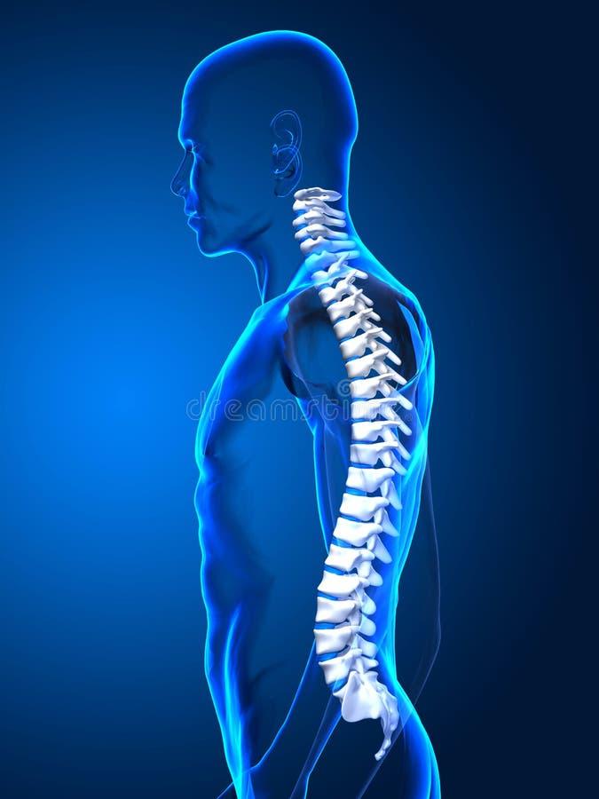 Good posture concept. Humna spine front vie on black stock illustration