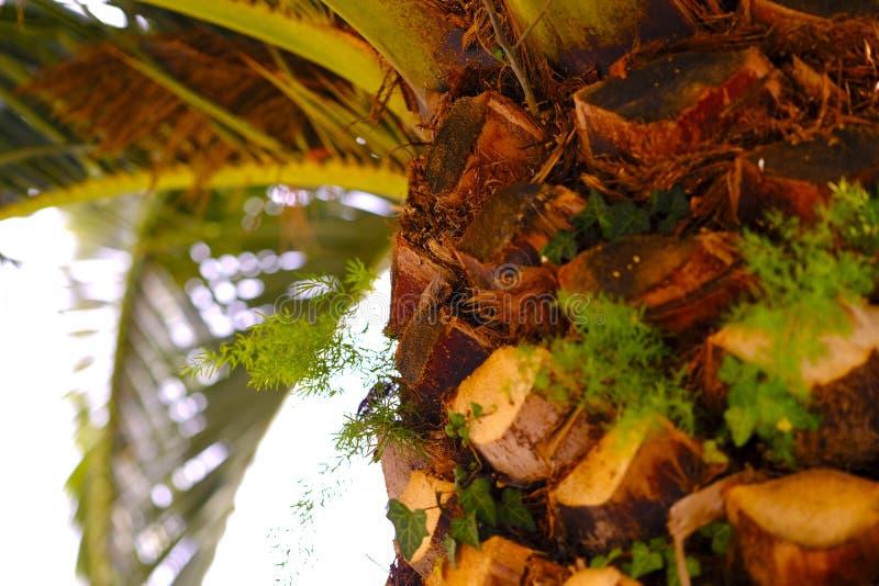 Southern palm tree, tree bark stock photo