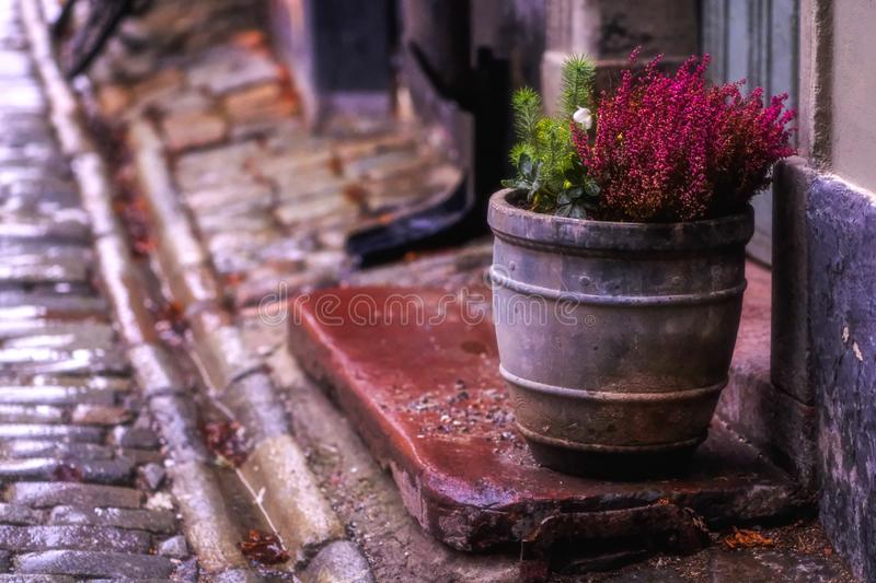 Old street flower pot, town. Good quality positive street sight. You may see wet street of an old town somewhere in Europe. Paving stone road, buildings and even royalty free stock image