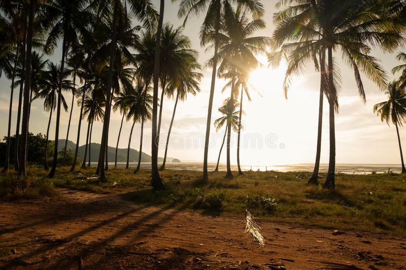 Good vibe of the coconut plantation in morning. Near seashore and sunshine in morning that is splashing through coconut tree creates shadow and rim light makes stock photography