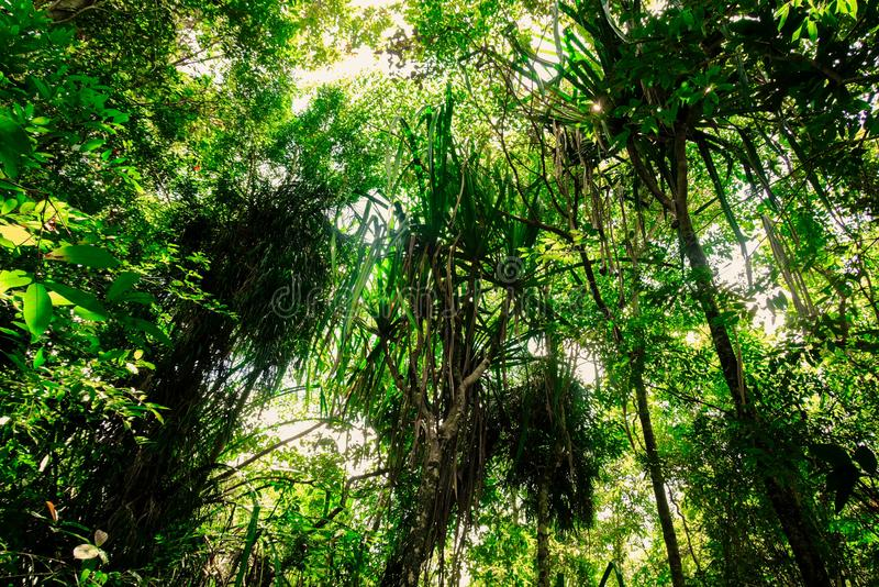 Good vibe is fresh and dense of lush tropical forest.forest and environment concept. Good vibe is fresh and dense of lush tropical forest in Thailand.forest and royalty free stock photography